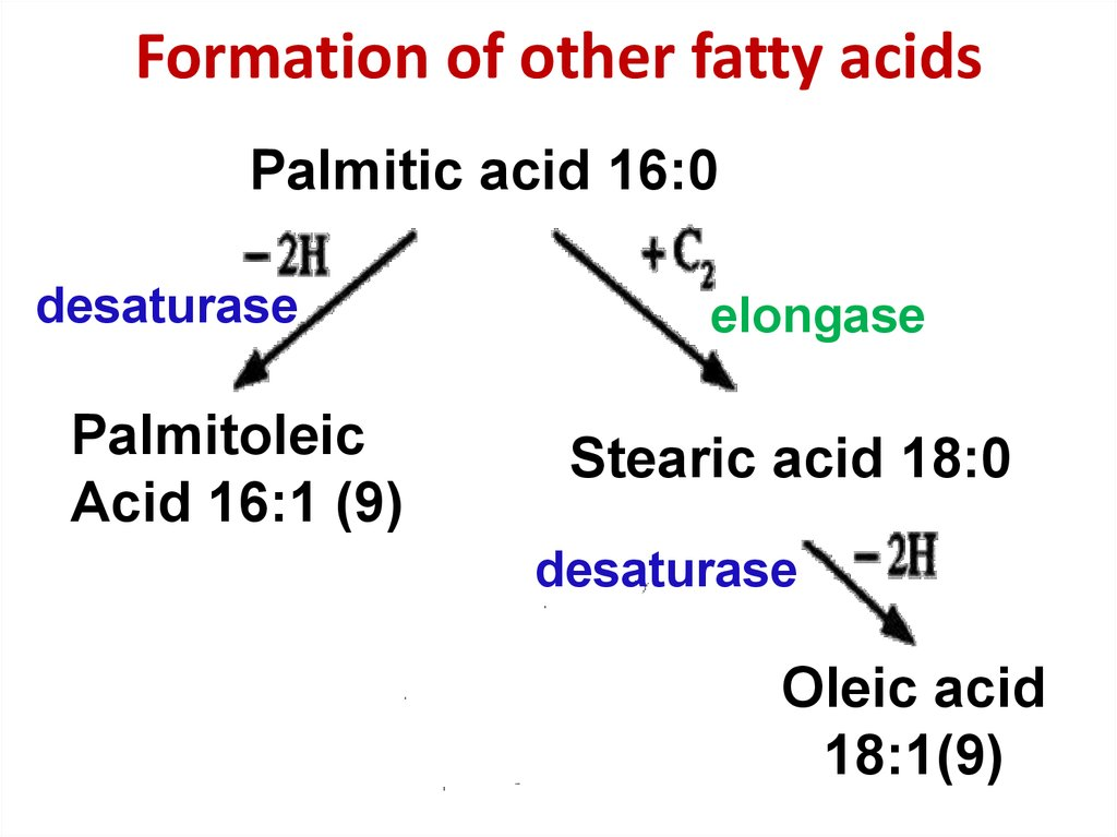 Formation of other fatty acids
