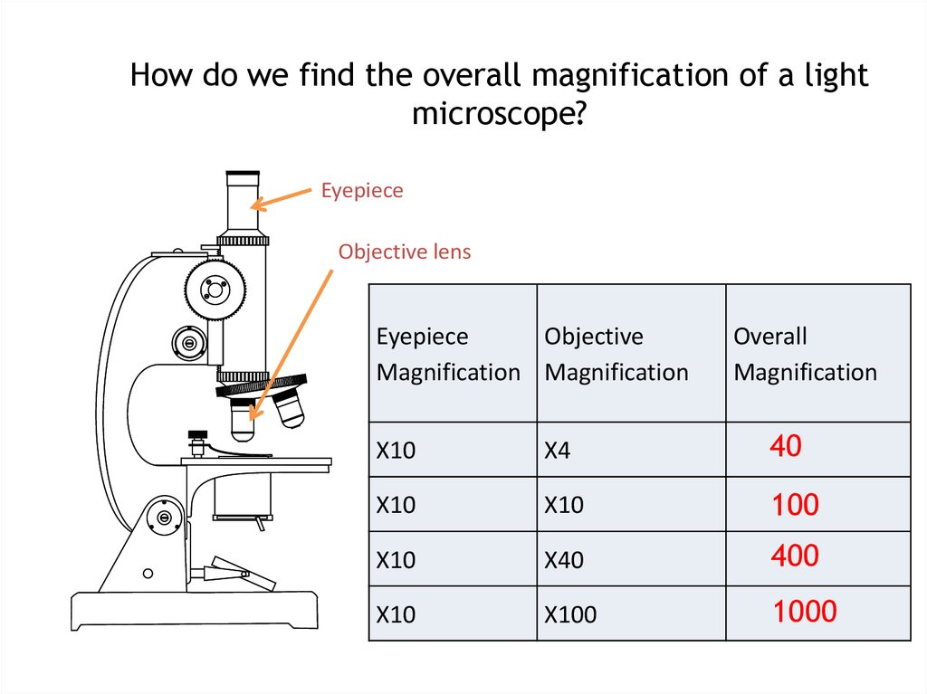 ... How Do We Find The Overall Magnification Of A Light Microscope?