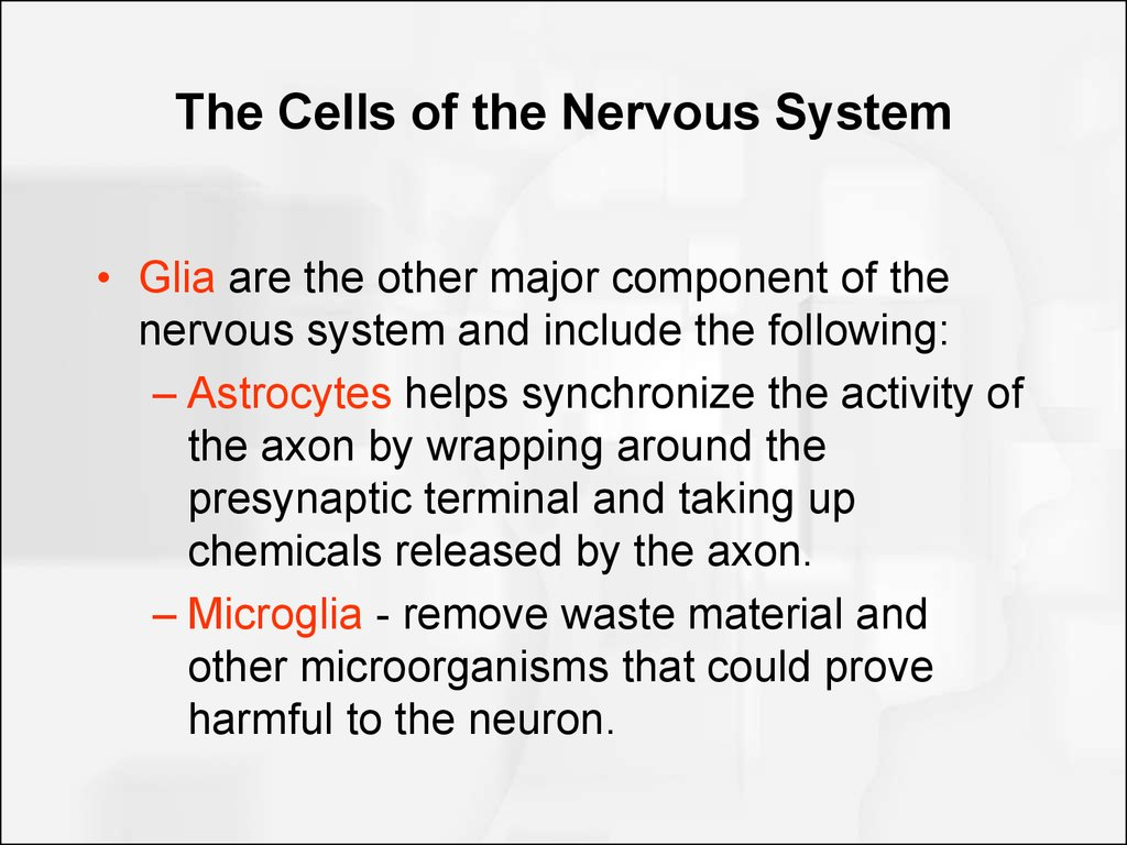 The Cells of the Nervous System