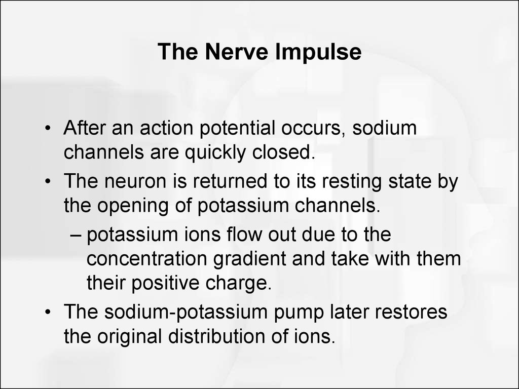 The Nerve Impulse