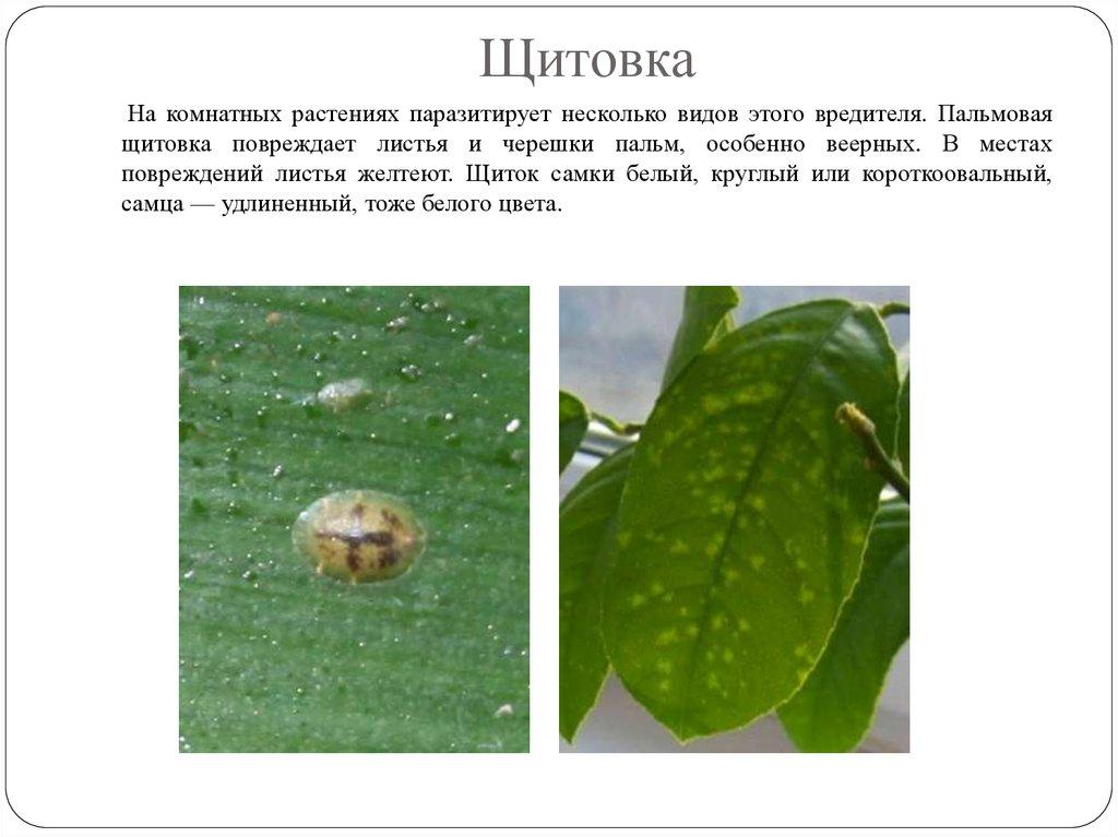 как избавиться от вредителей в почве комнатных растений