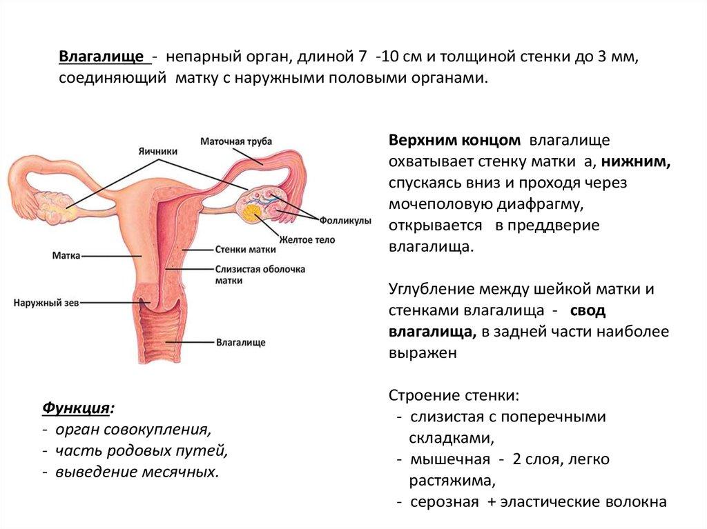 мужской половой член размеры Приморско-Ахтарск