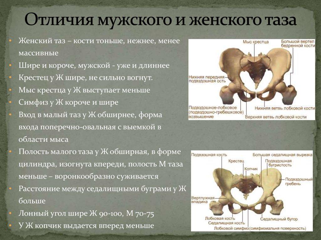 движка кости мужская и женская чем отличаются магазинов России
