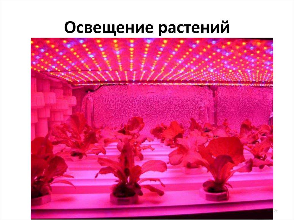 Кактус суккулент  купить в Хабаровске цена 150 руб