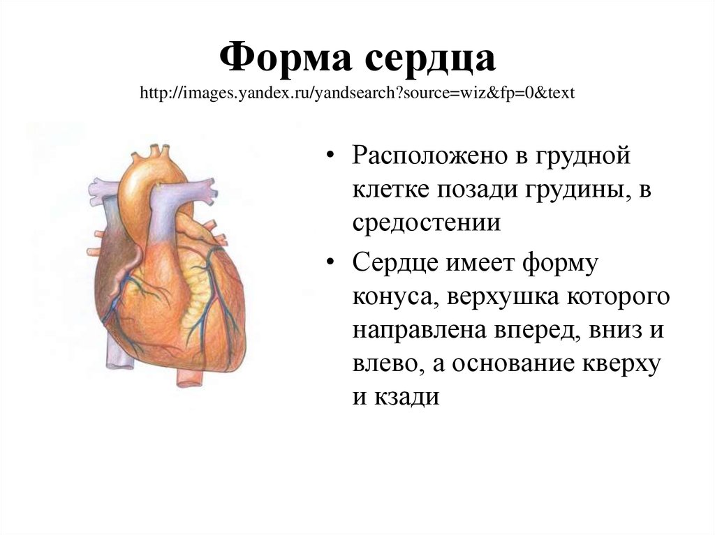 Форма сердца http://images.yandex.ru/yandsearch?source=wiz&fp=0&text