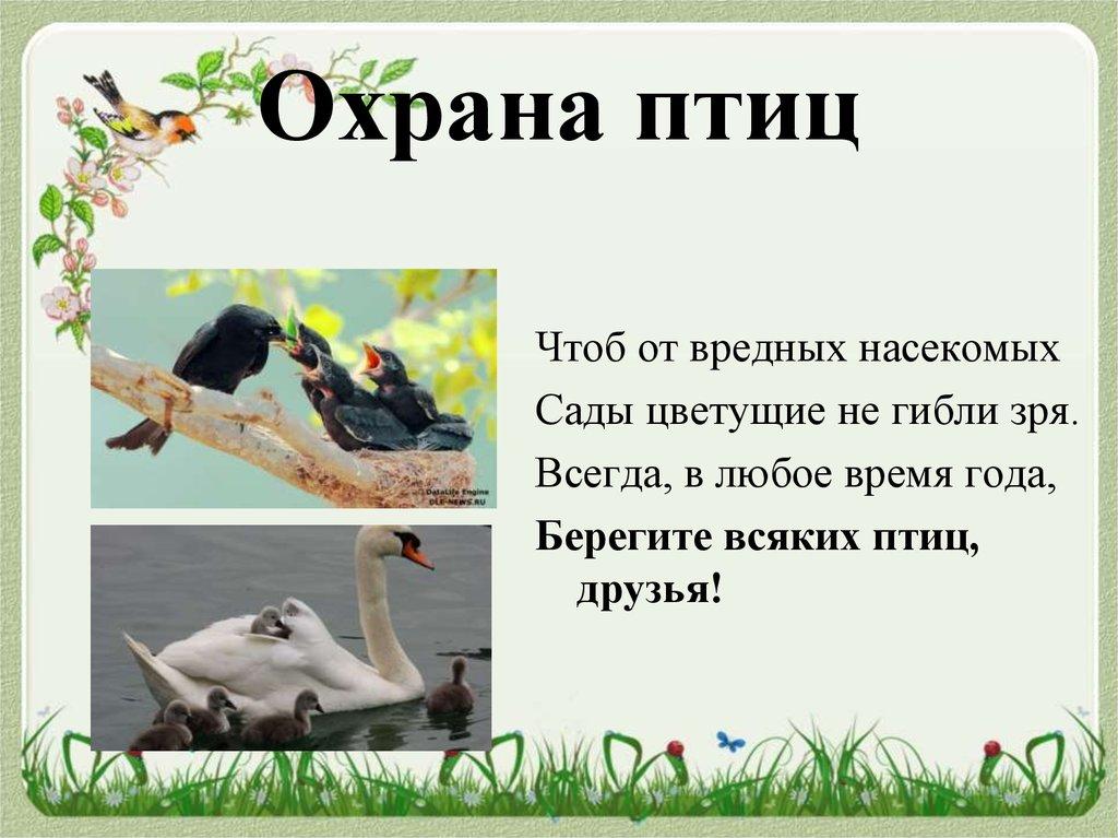 Защита птиц картинка