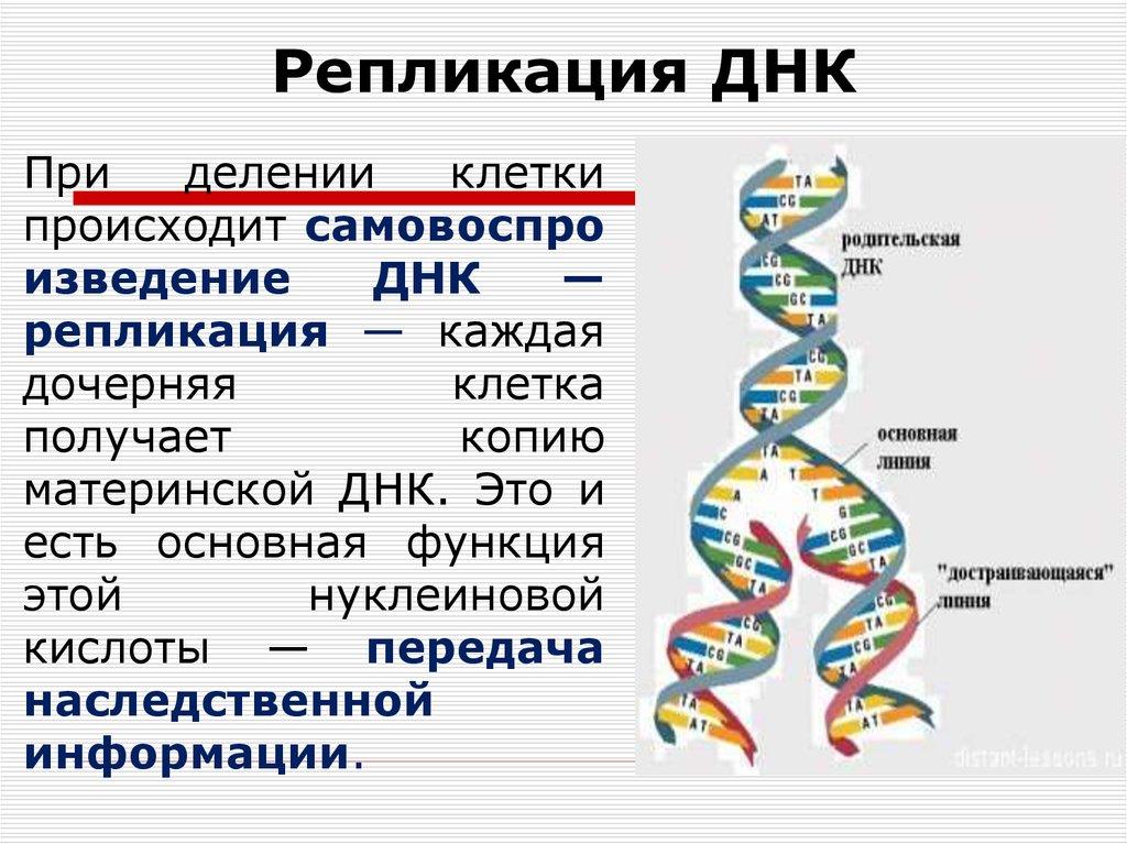 них картинки молекулы днк и репликации днк ботулотоксина