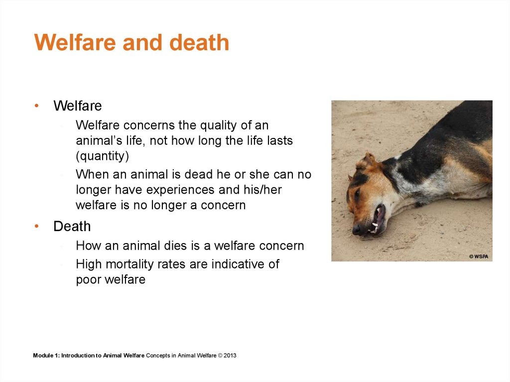 Welfare and death