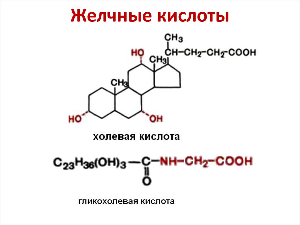 Обмен липидов - online presentation Липиды Жиры