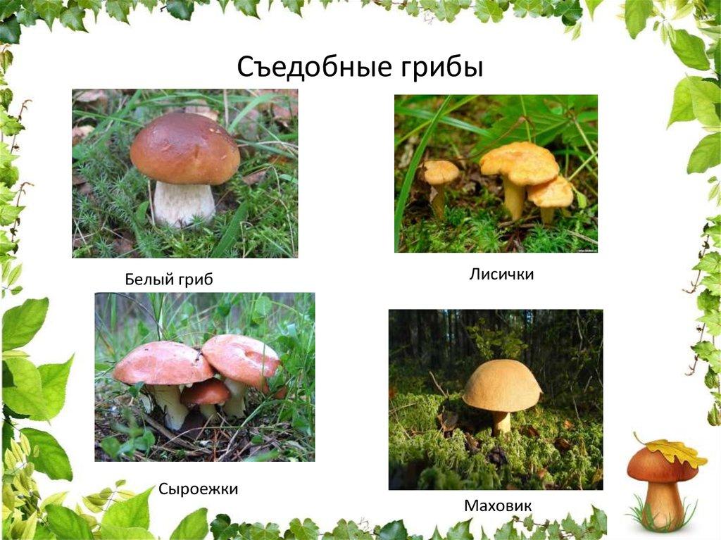 Картинки грибов съедобных с названиями