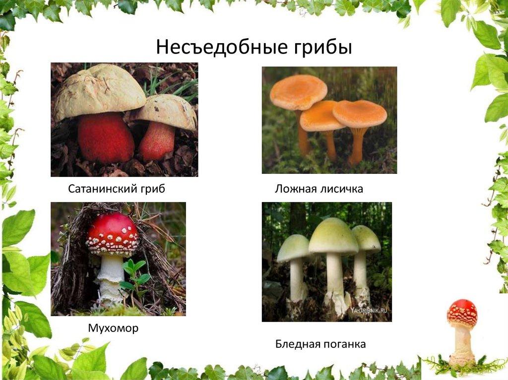 фото и описание несъедобных грибов моей