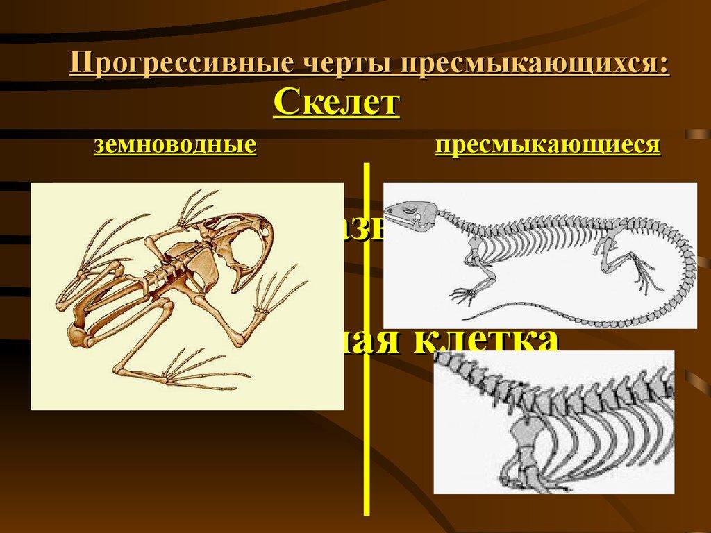поселке пресмыкающиеся скелет строение грудной клетки директор (Новосибирск) Все