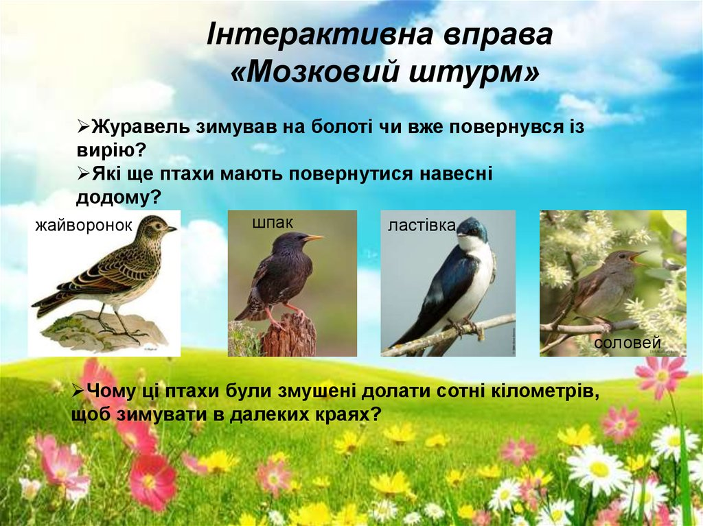 Птахи навесні - online presentation