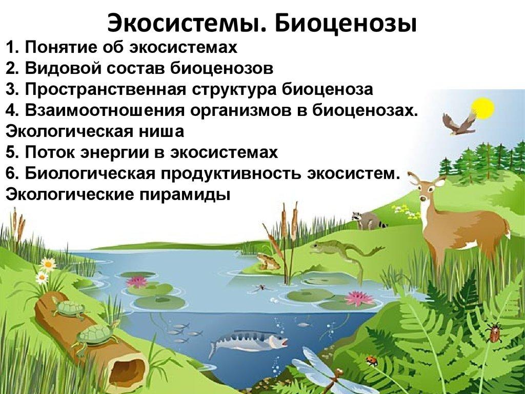 Примеры экосистем картинки