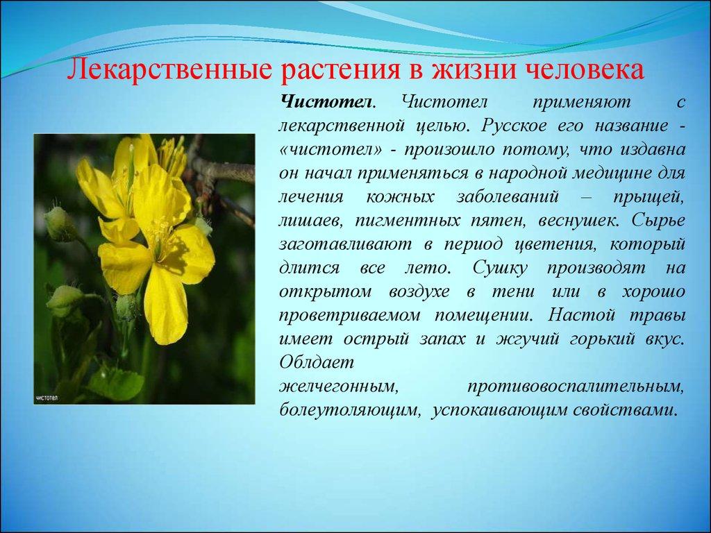 Лекарственные растения класс презентация онлайн Лекарственные растения в жизни человека