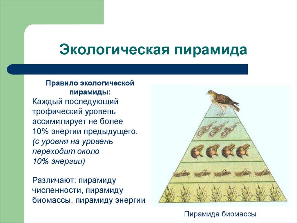 Гостиницы, сформулируйте правила экологической пирамиды что торжественно