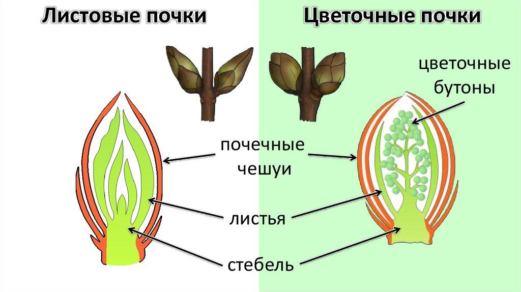 интересная биология 6 класс