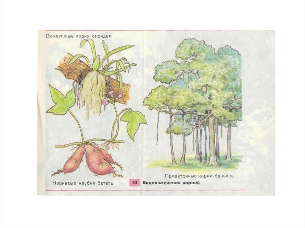 биология общее знакомство с цветковыми растениями