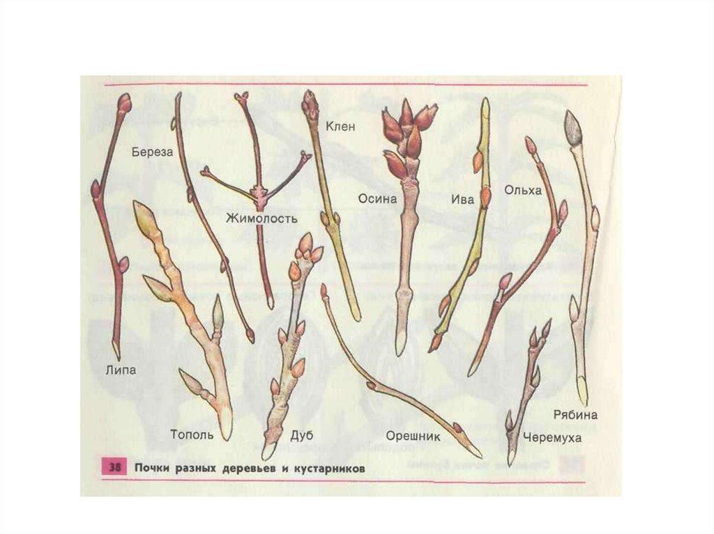 общее знакомство с цветковыми растениями 6 таблиц