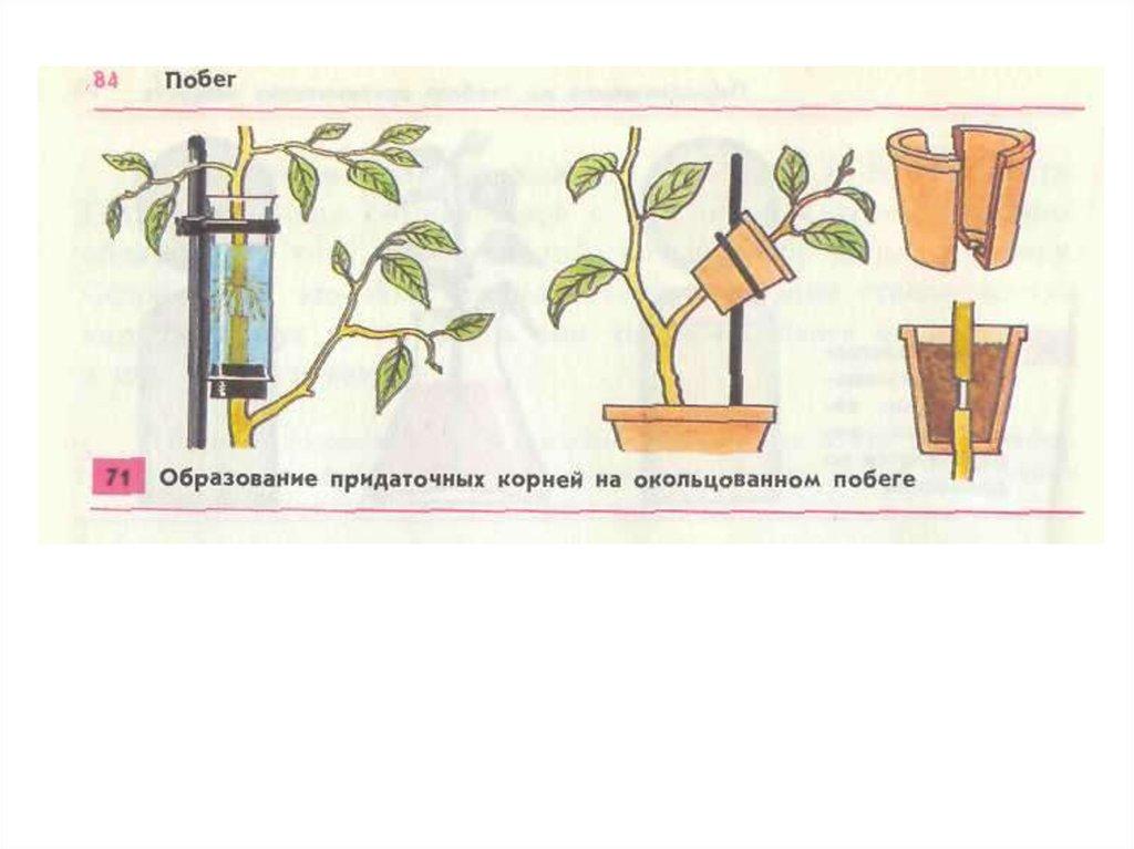 общее знакомство с растениями тест