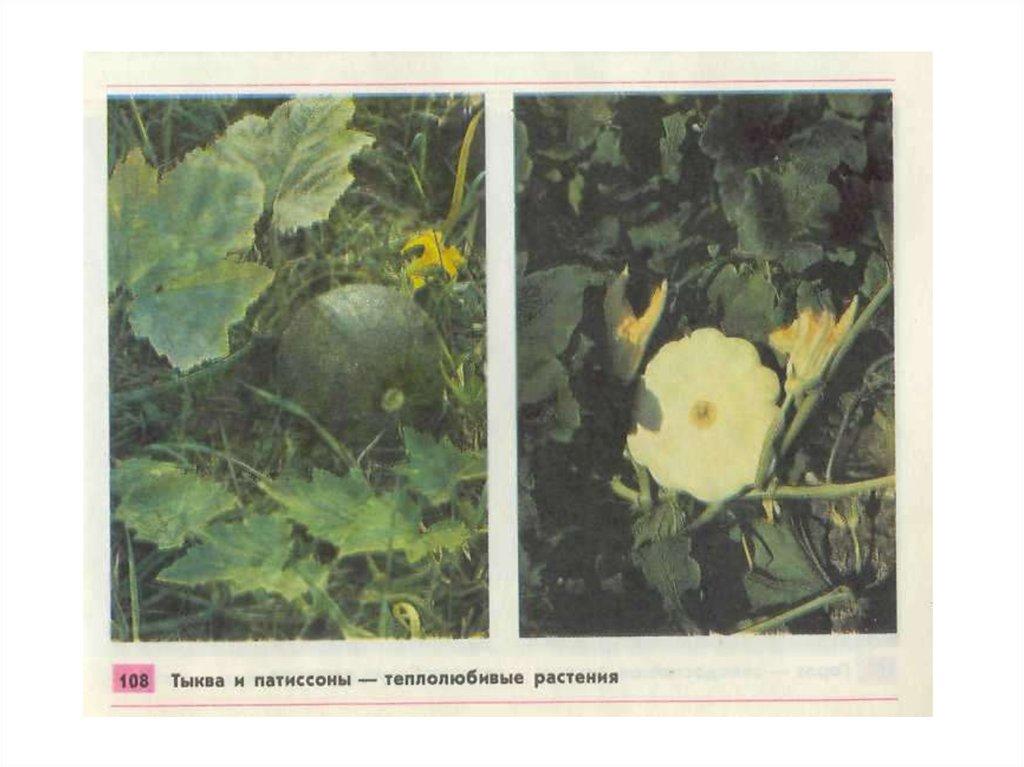 общее знакомство с растениями презентация 6 класс