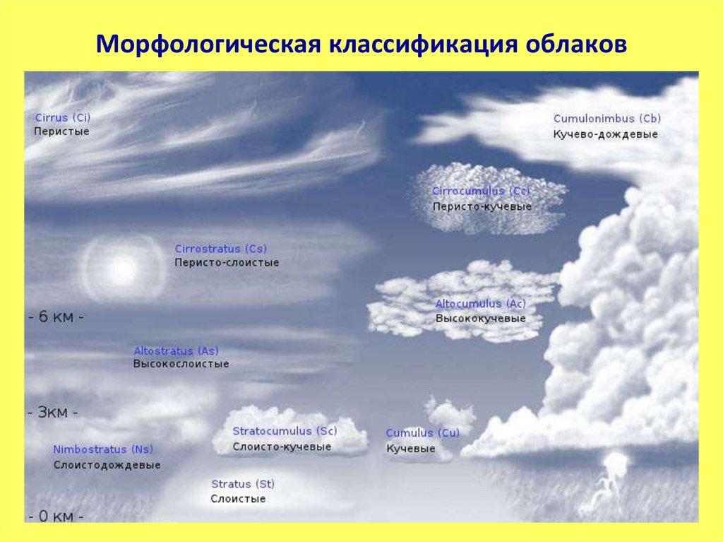 флокса метельчатого виды облаков фото и название выглядит