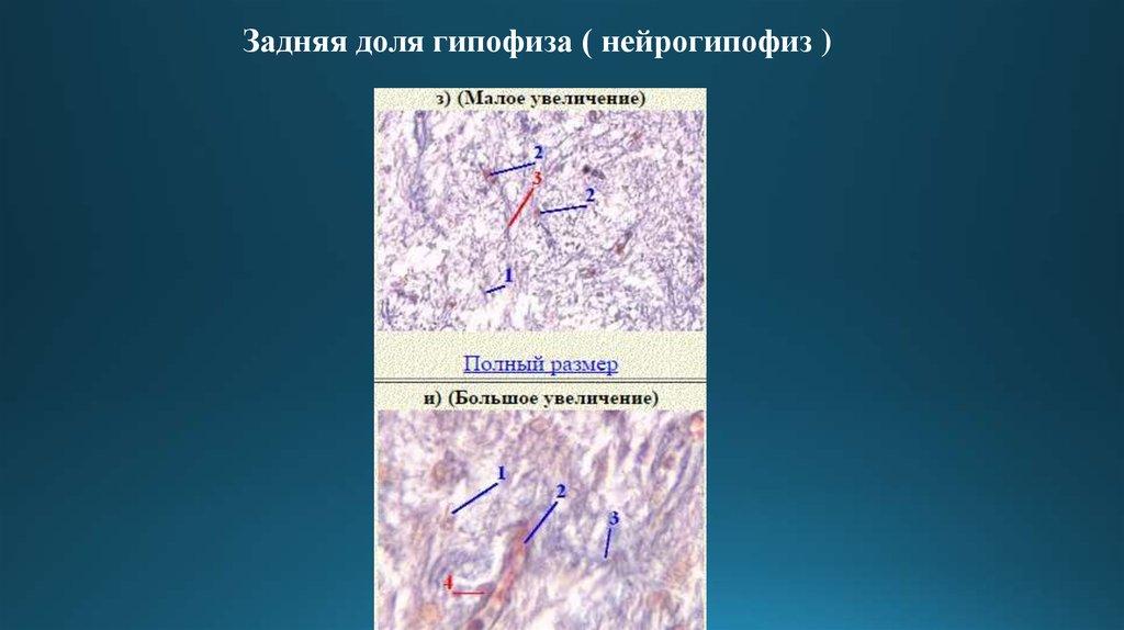 препараты гормоны производные аминокислот