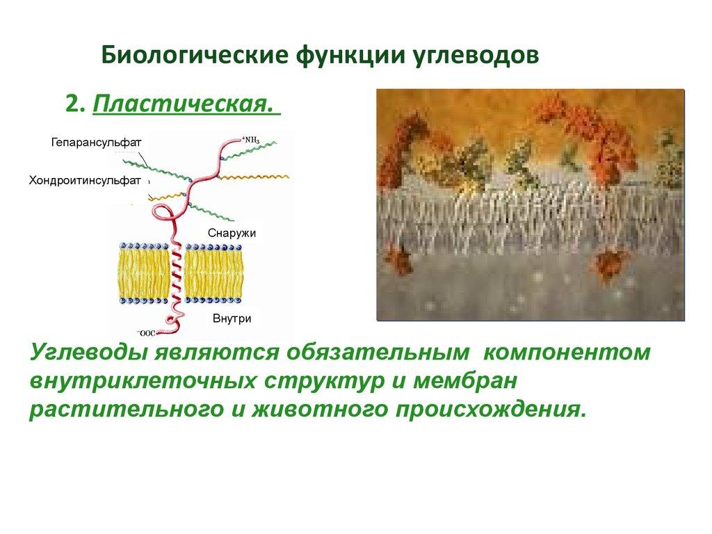 Картинки функции углеводы