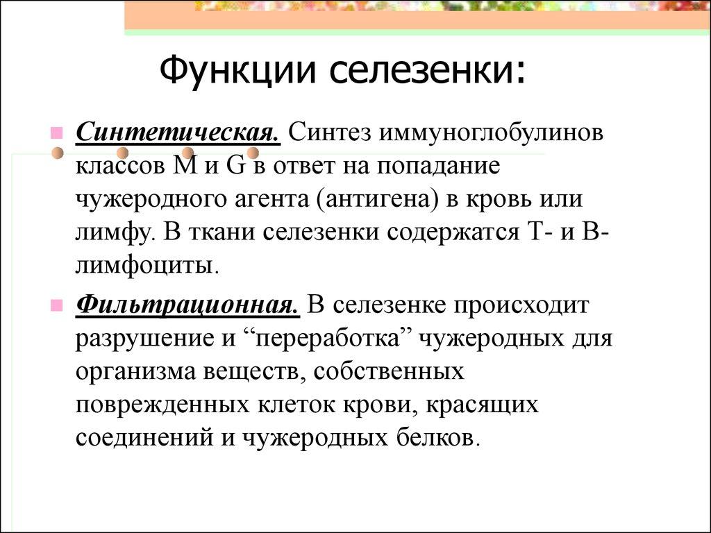 вакансии функции селезенки в организме человека свежие вакансии учителя