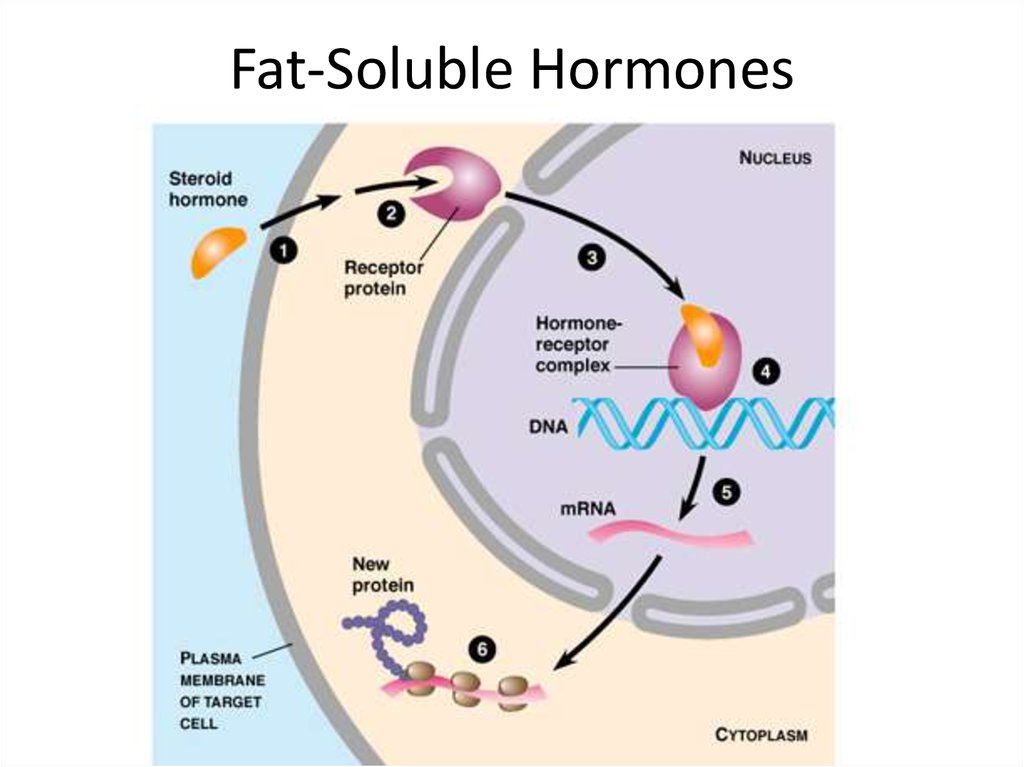 Fat-Soluble Hormones