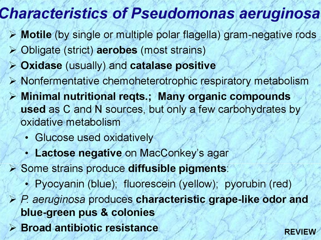 characteristics of pseudomonas aeruginosa motile by single or multiple polar flagella gram negative rods obligate strict aerobes most strains