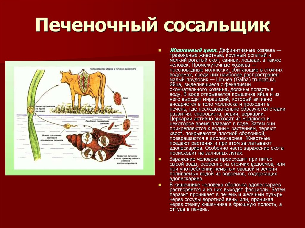 биология 6 класс гапонюк