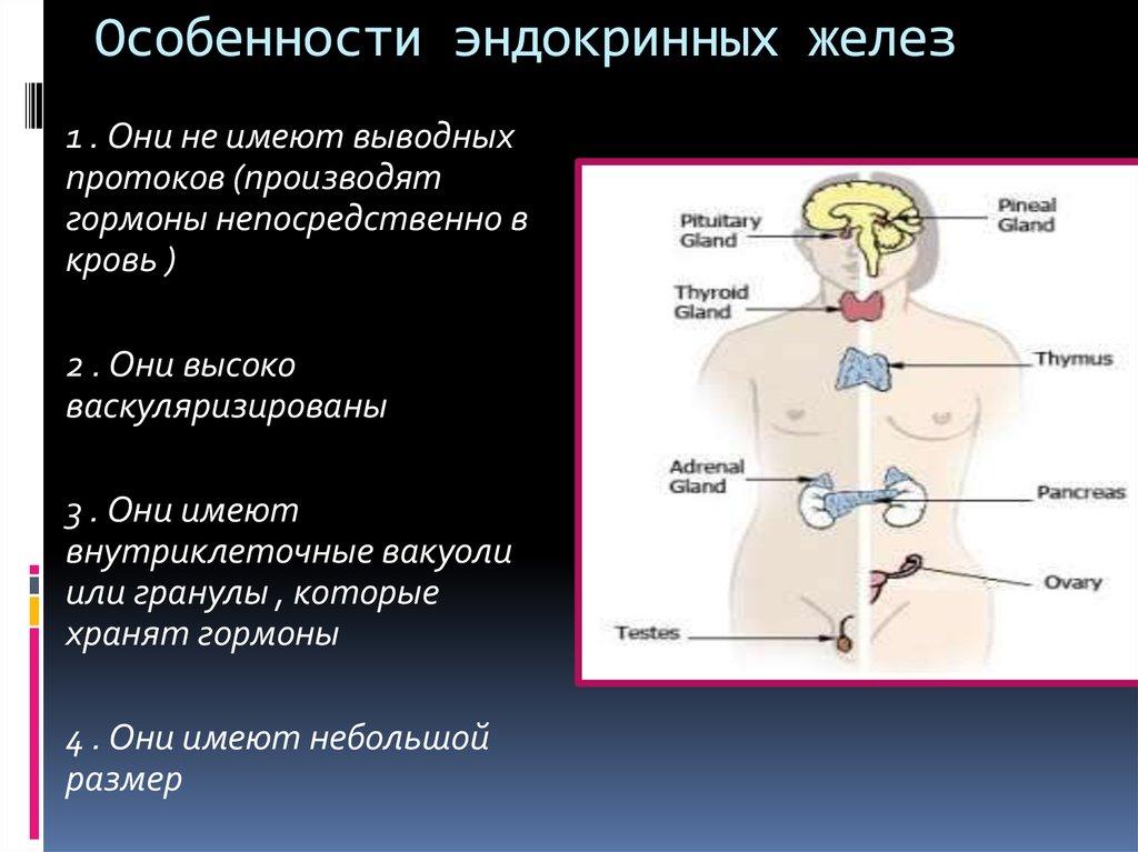 шпаргалка эндокринная система