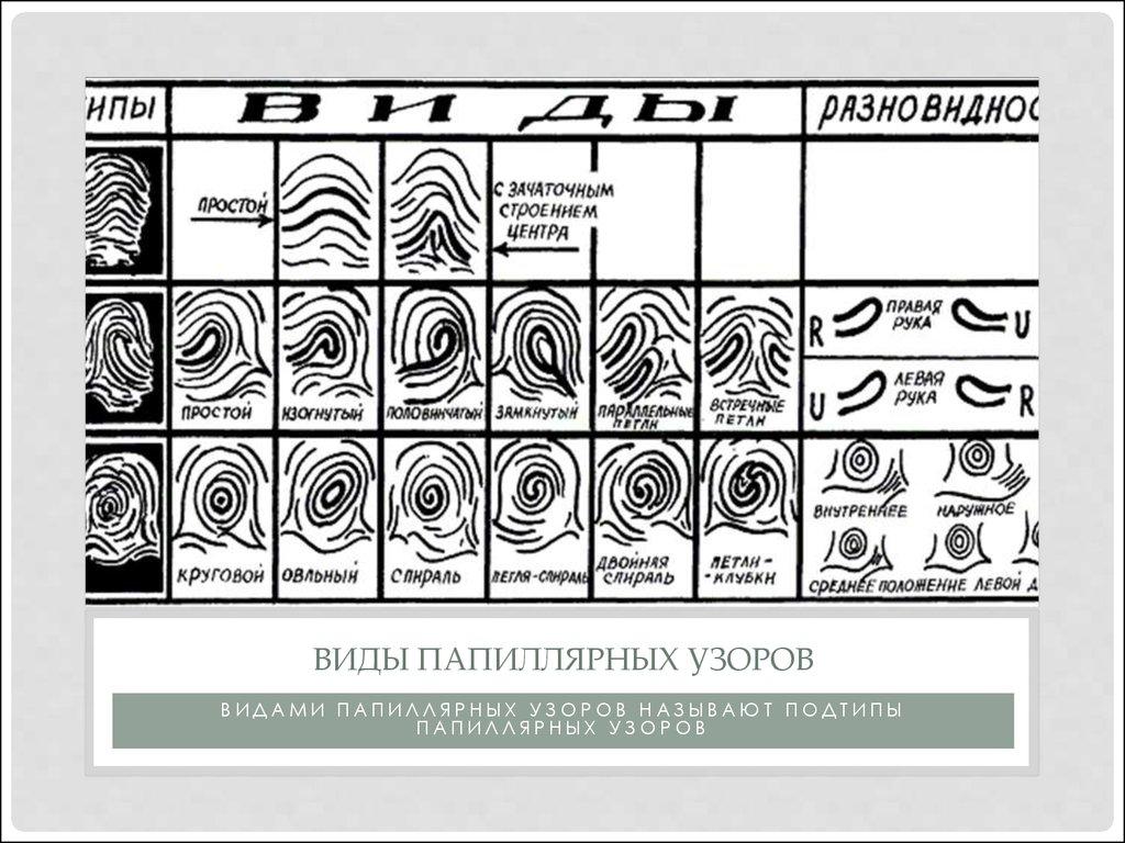 Типы папиллярных узоров пальцев рук картинки раз