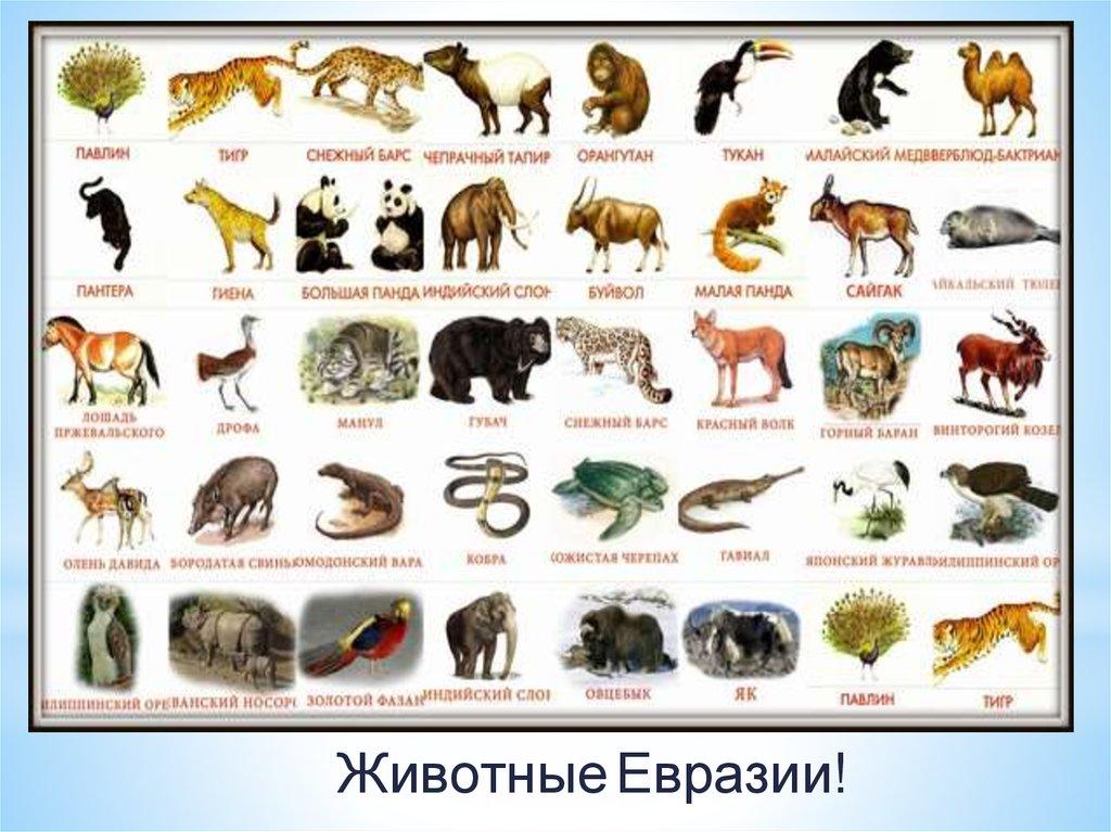 Всероссийский конкурс книжной иллюстрации Образ книги