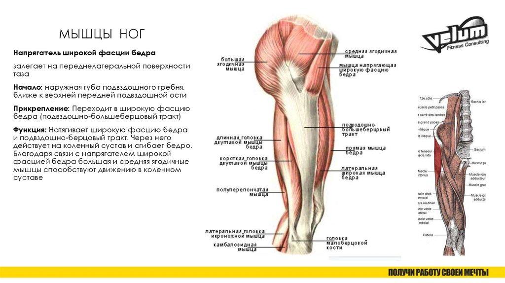 названия мышц ног с картинками найдутся завистники, желающие