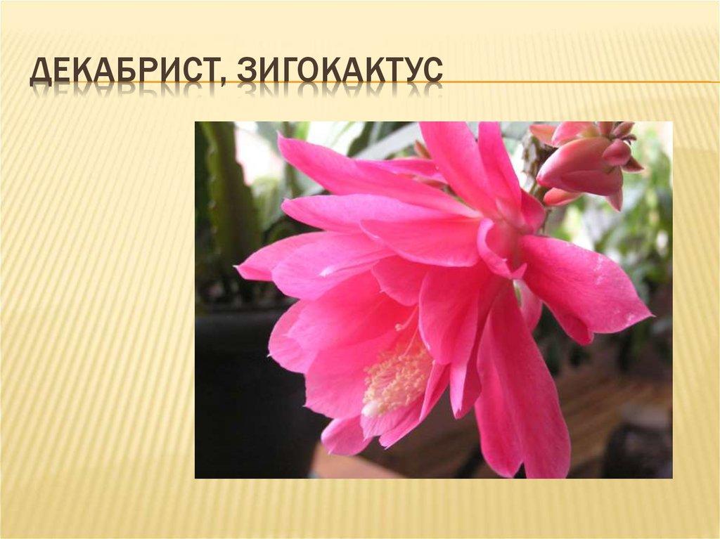 Домашние растения Энциклопедия домашних растений