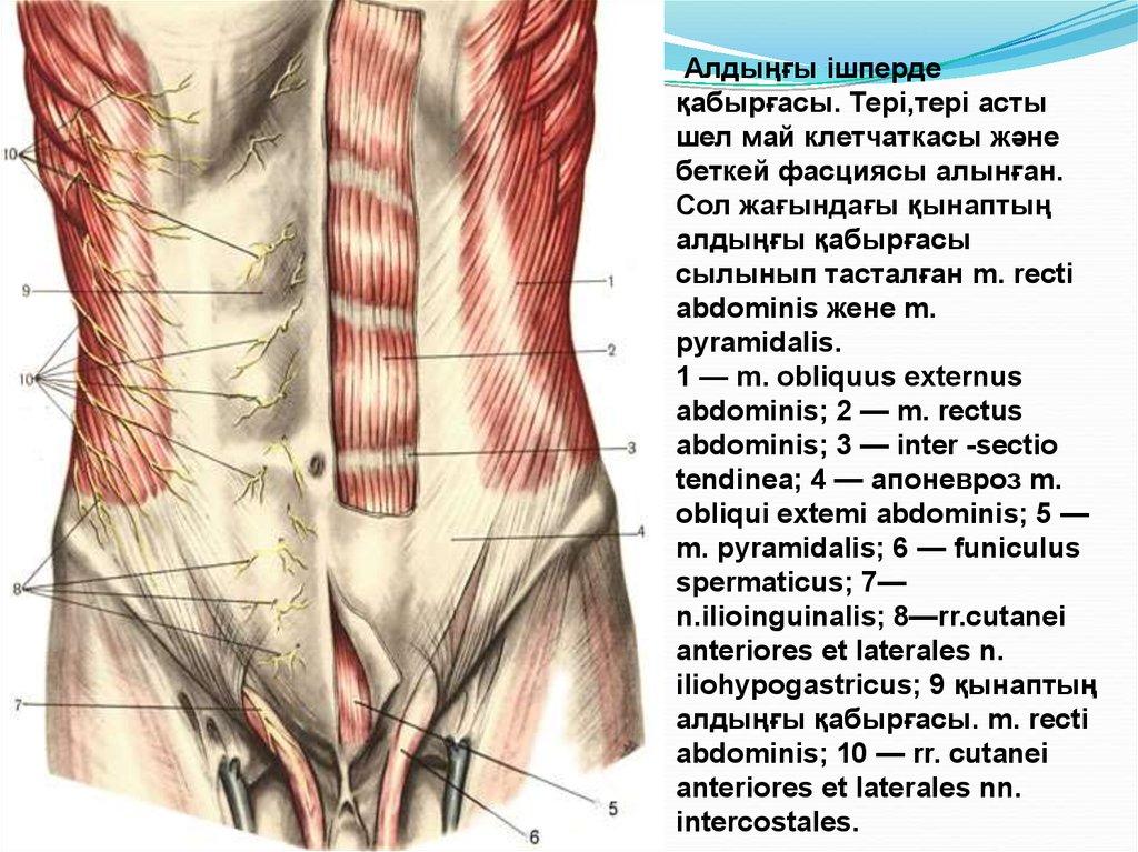 Großzügig Fußarterien Anatomie Bilder - Anatomie Ideen - finotti.info
