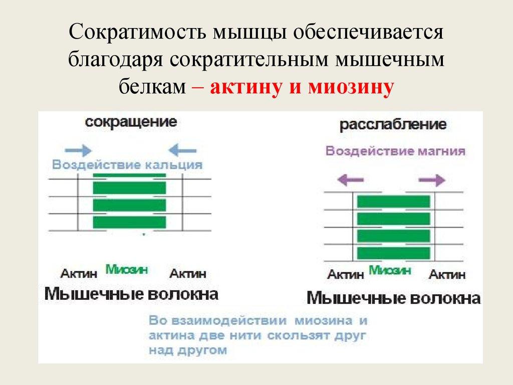 ebook neurobiology of