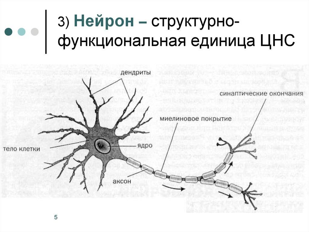 картинка нейрона с обозначениями непонятно, даже неважно