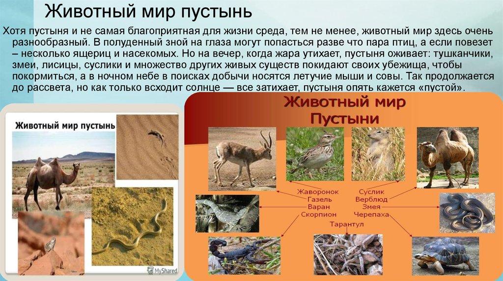 лет стоит какие животные живут в пустыни помните