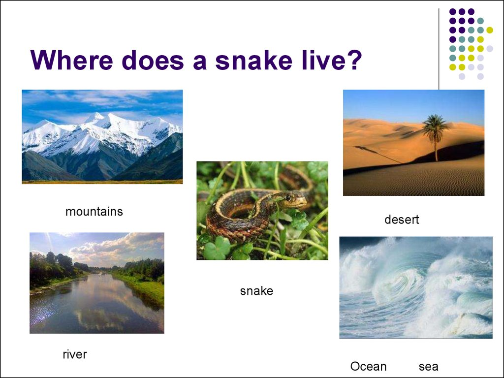 Where does a snake live?