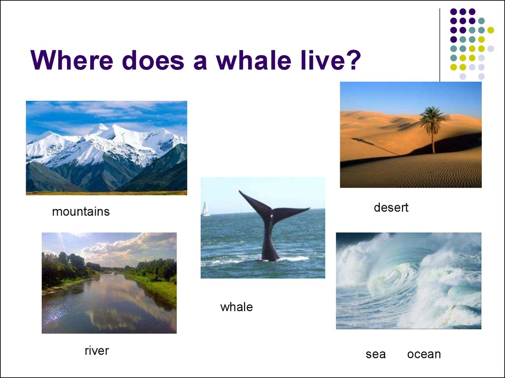 Where does a whale live?