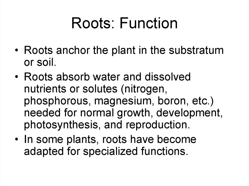 Roots: Function