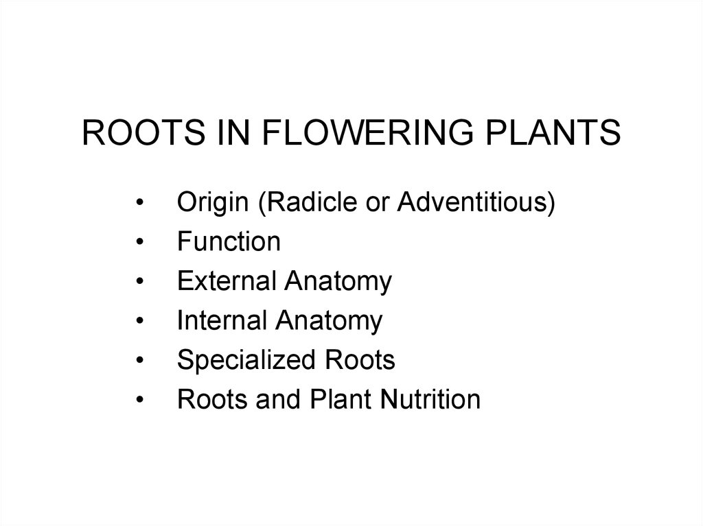 ROOTS IN FLOWERING PLANTS