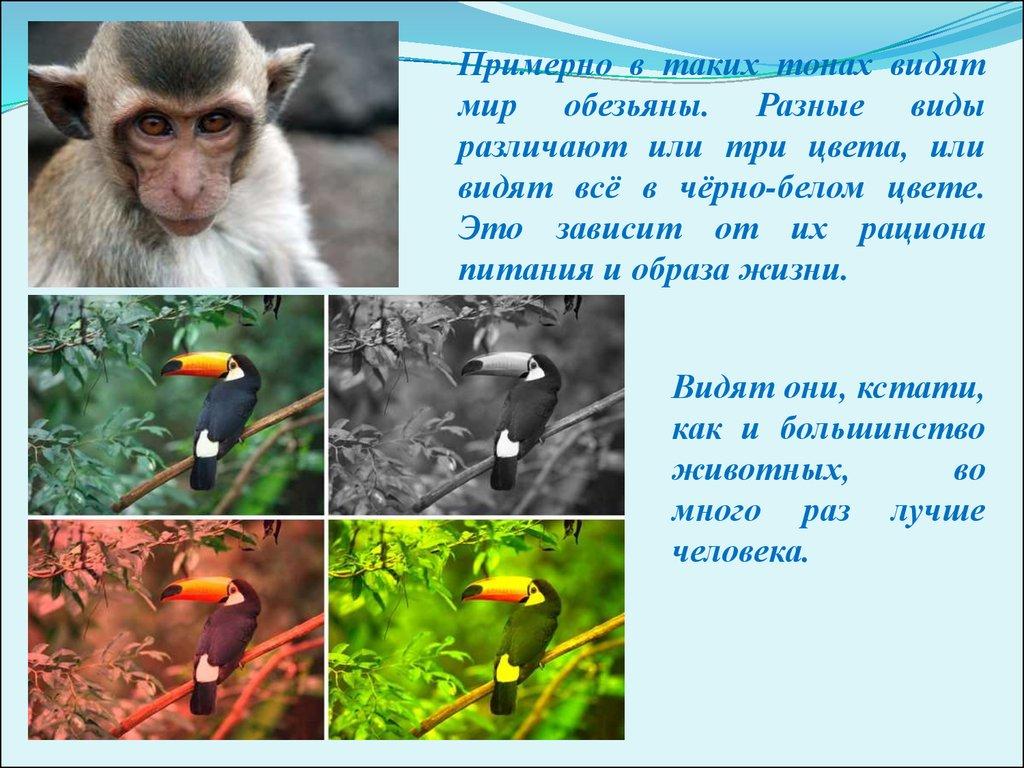 Доклад как видят животные 2010
