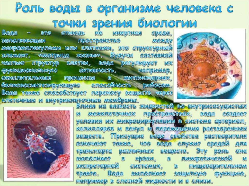 что с биологической точки зрения представляет собой морская капуста