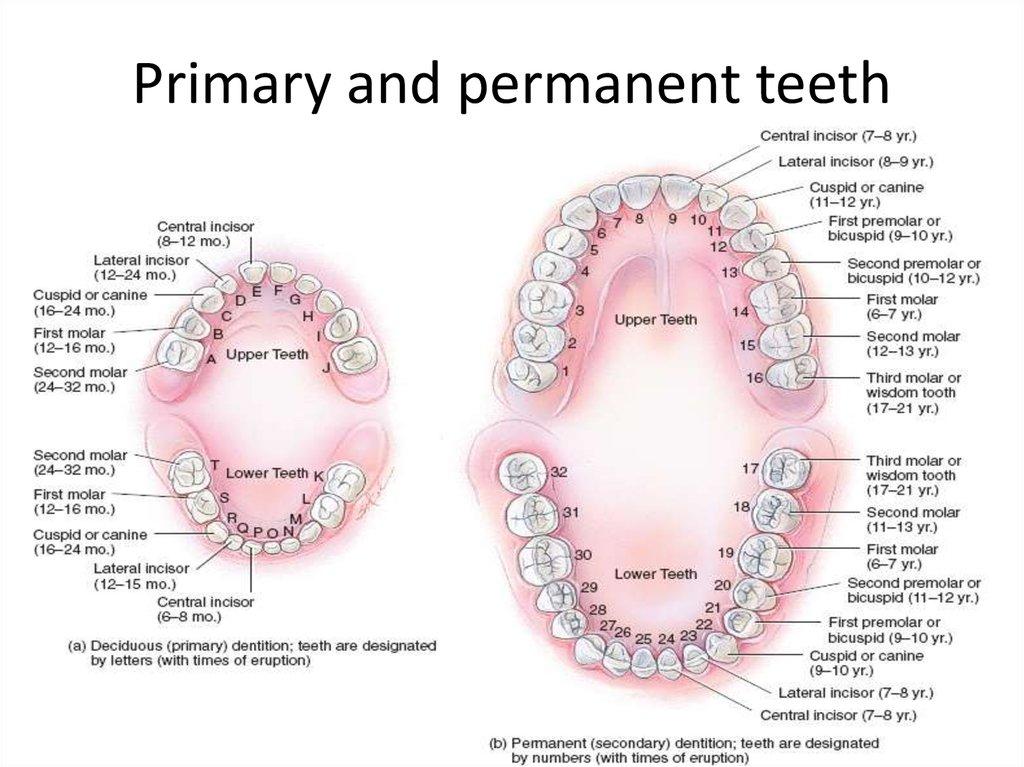 what periodontal disease is