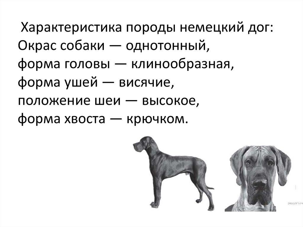 спрос характеристика собак и картинки заданный глава