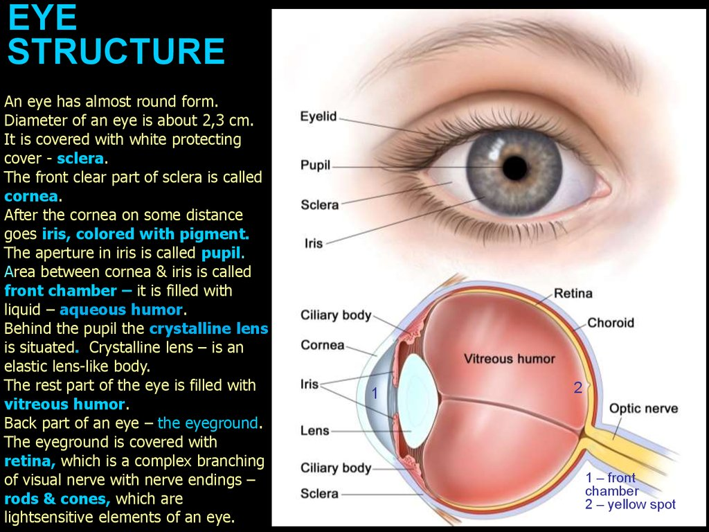 Optics Of Vision Eye Structure